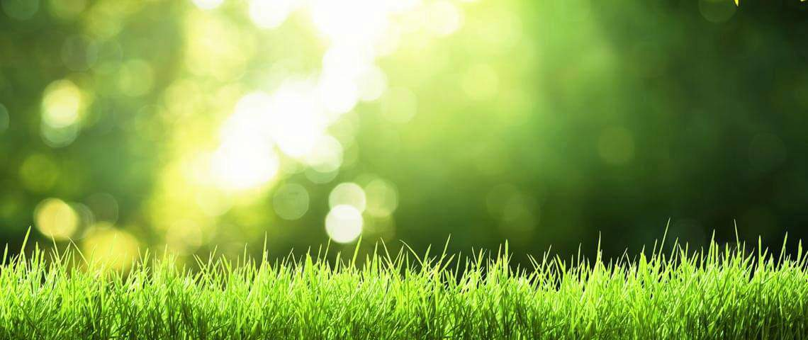 7 Tips for Spring Lawn Care
